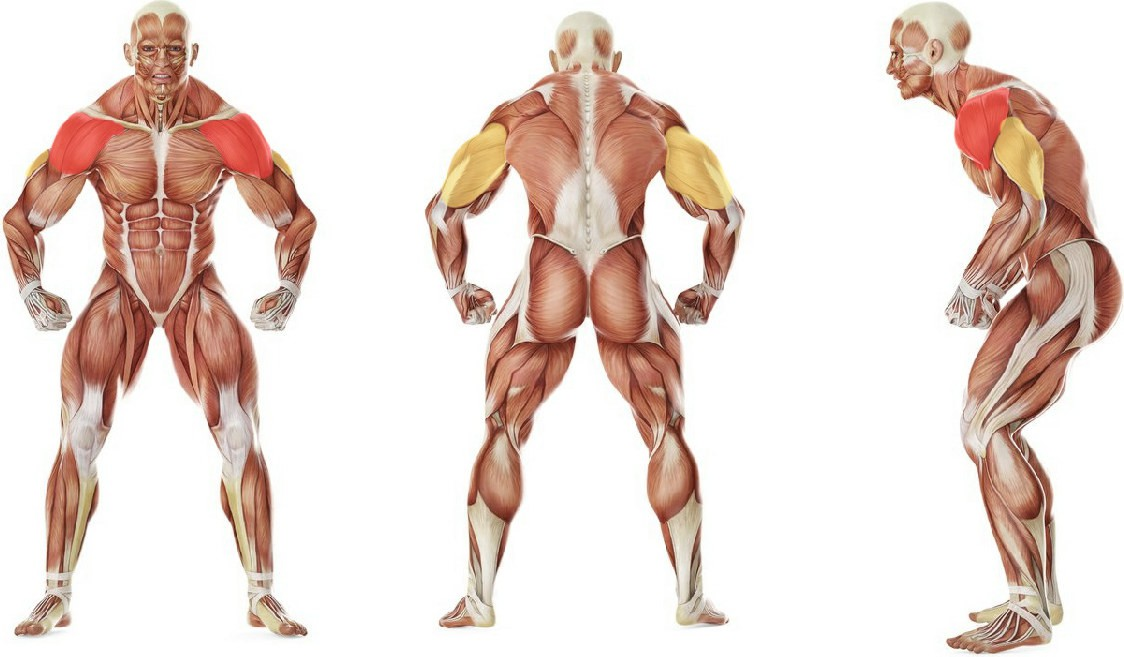 What muscles work in the exercise Dumbbell Incline Shoulder Raise