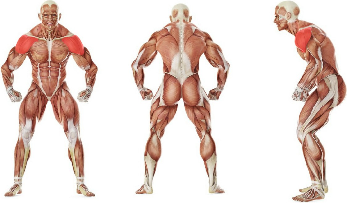 What muscles work in the exercise Power Partials