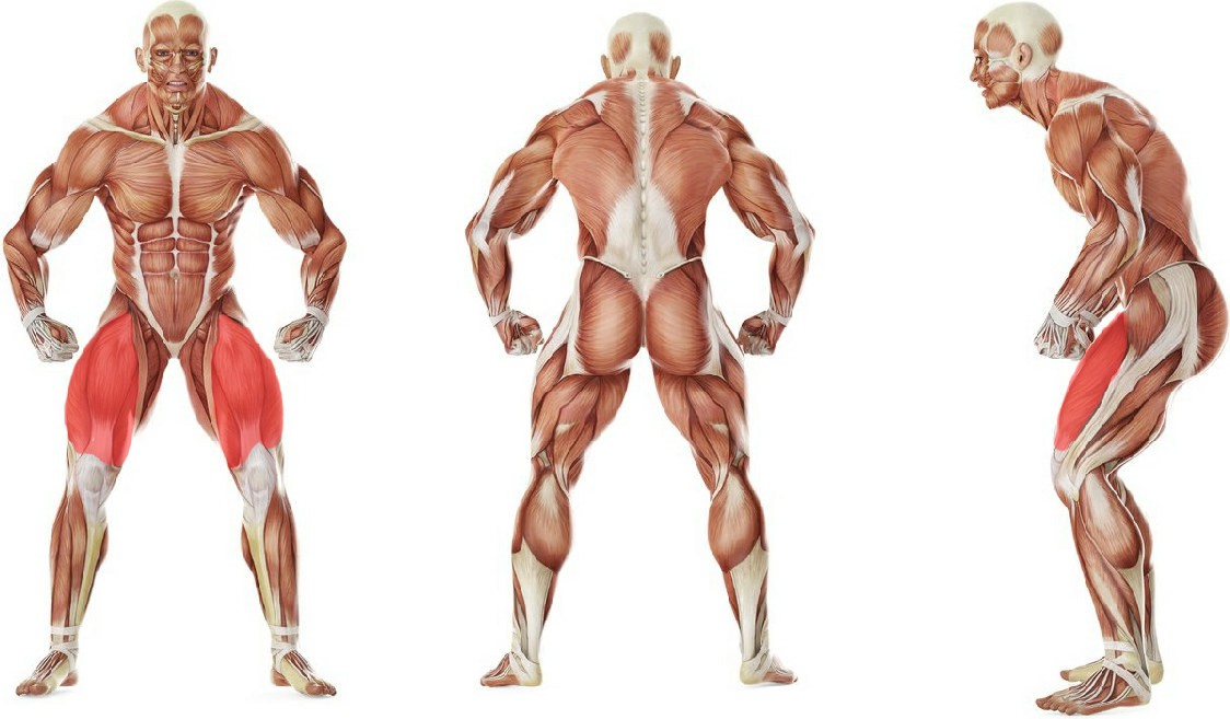 What muscles work in the exercise Leg Extensions