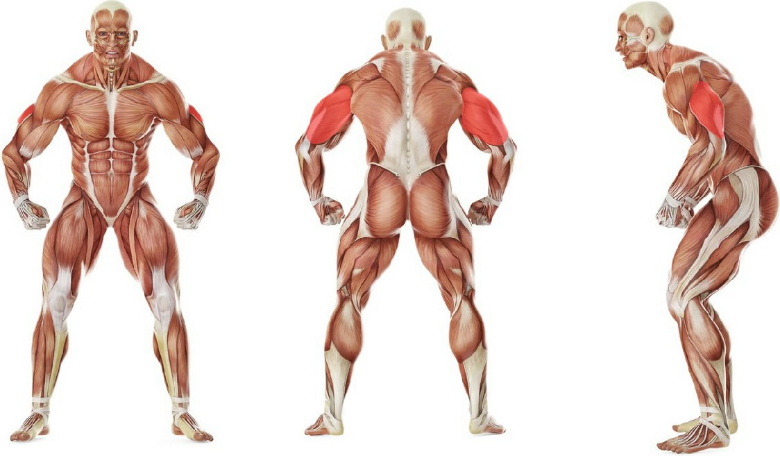 What muscles work in the exercise Decline Dumbbell Triceps Extension