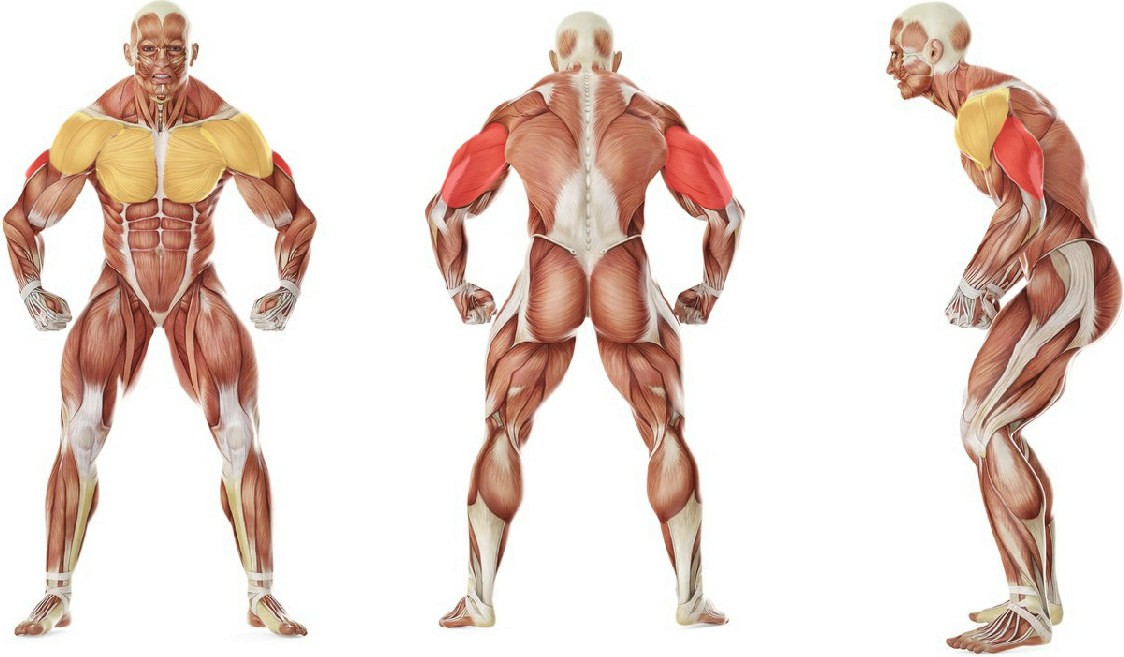 What muscles work in the exercise Lying Dumbbell Tricep Extension